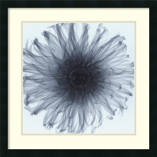 Amanti Art 'Dahlia (Blue)' by Steven N. Meyers Framed Photographic Print