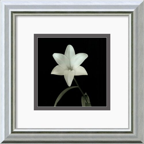 Amanti Art 'Flower Series VI' by Walter Gritsik Framed Photographic Print