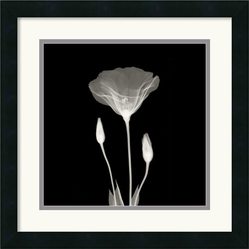 Amanti Art Poppy in Lace Framed Painting Print