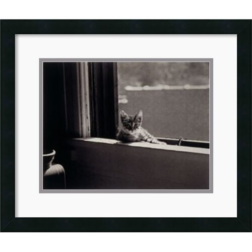 Amanti Art 'Kitty in the Window' by Jim Holmes Framed Photographic Print