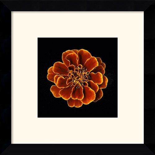 Amanti Art Caramel Ruffles Framed Photographic Print