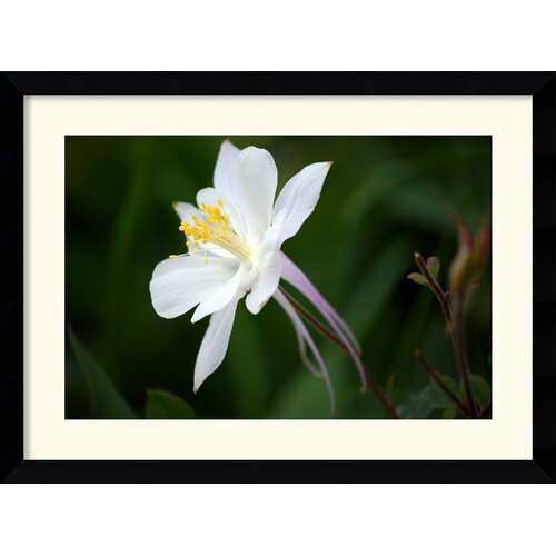 Amanti Art 'Columbine' by Andy Magee Framed Photographic Print