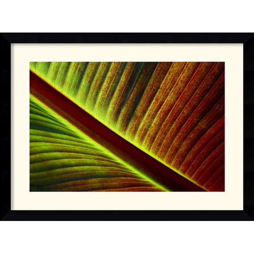 Amanti Art 'Palm' by Andy Magee Framed Photographic Print