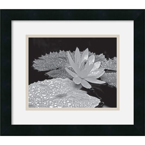 Amanti Art 'Droplets on Water Lily' by Dennis Frates Framed Photographic Print