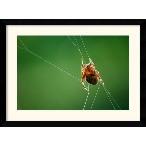 Amanti Art 'Spider and Web' by Andy Magee Framed Photographic Print
