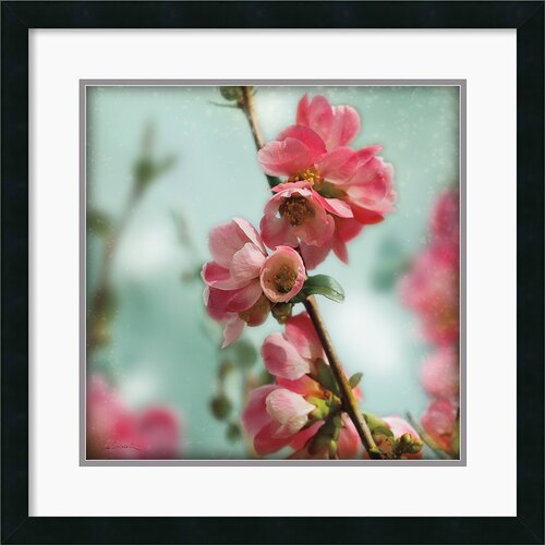 Amanti Art 'Quince Blossoms III' by Sue Schlabach Framed Photographic Print
