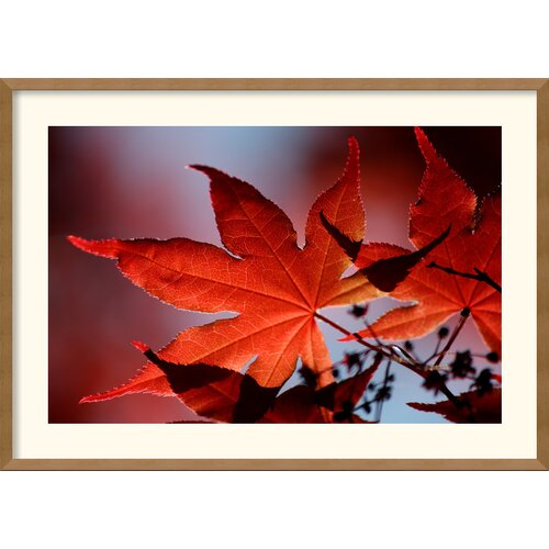 Amanti Art 'Red Maple' by Andy Magee Framed Photographic Print