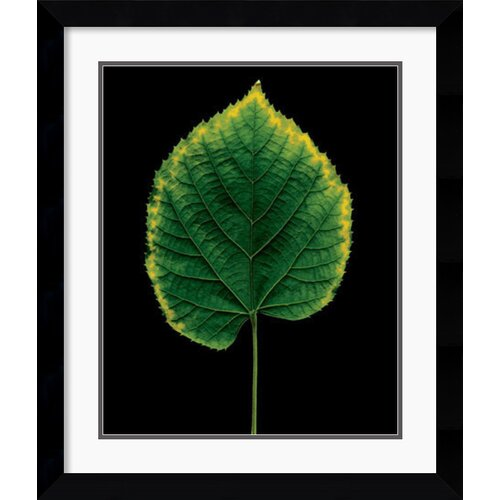 Amanti Art 'European Linden' by Christopher Griffith Framed Photographic Print