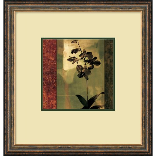 'Mesmerized II' by Chris Donovan Framed Graphic Art
