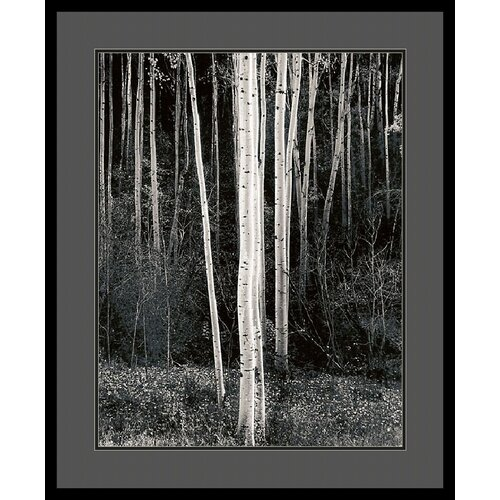 Amanti Art 'Aspens' by Ansel Adams Framed Photographic Print
