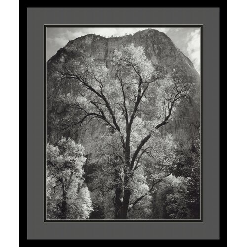 Amanti Art 'Autumn Tree Against Cathedral Rocks' by Ansel Adams Framed Photographic Print