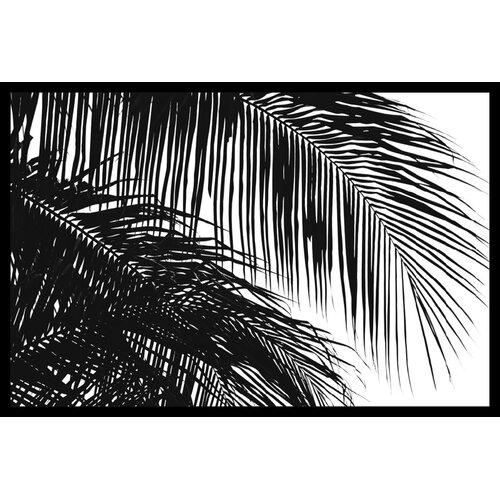 Amanti Art 'Palms 3' by Jamie Kingham Framed Photographic Print