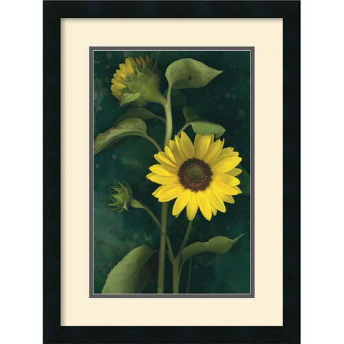 Amanti Art 'Two Sunflower Stems' by Christina Florkowski Framed Photographic Print
