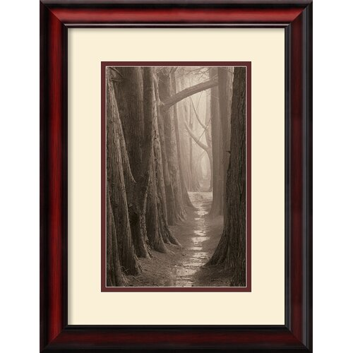 Amanti Art 'Cypress Trail' by Paul Kozal Framed Photographic Print