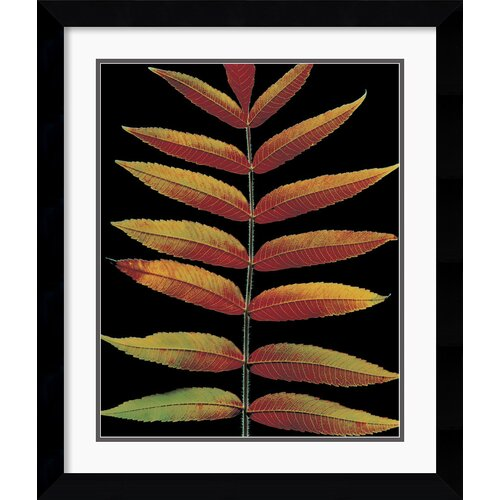 'Staghorn Sumac II' by Christopher Griffith Framed Photographic Print