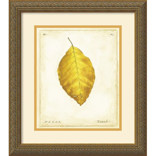 'Beech Leaf' by Meg Page Framed Graphic Art
