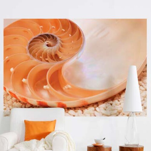 Brewster Home Fashions Komar Nautilus 1-Panel Wall Mural