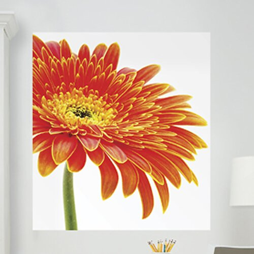 Brewster Home Fashions WallPops Art Kits Daisy Photographic Panels Wall Decal