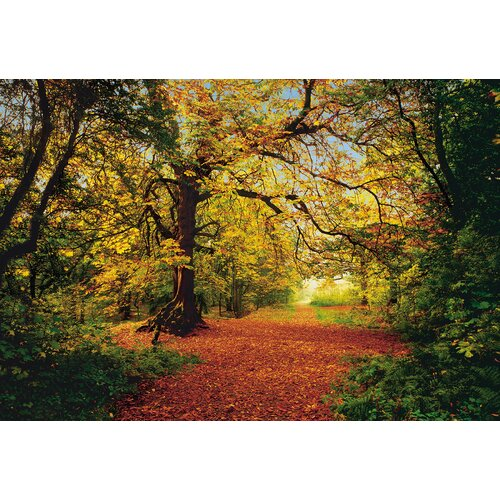 Brewster Home Fashions Komar Autumn Forest 8-Panel Wall Mural