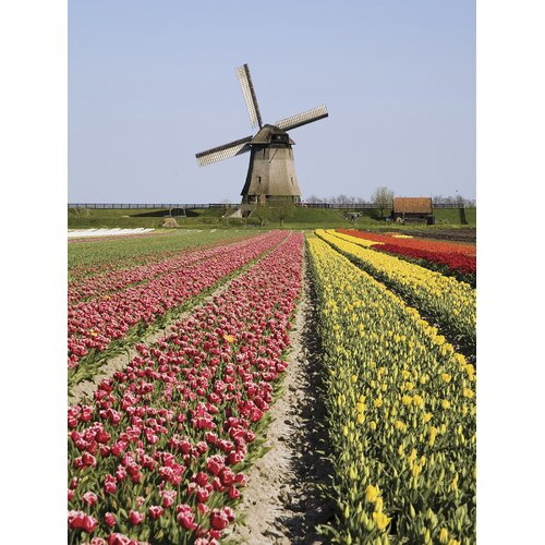 Ultimate Tulip Time Wall Mural
