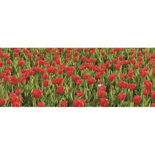 Brewster Home Fashions Ultimate Tulips Panoramic Wall Mural