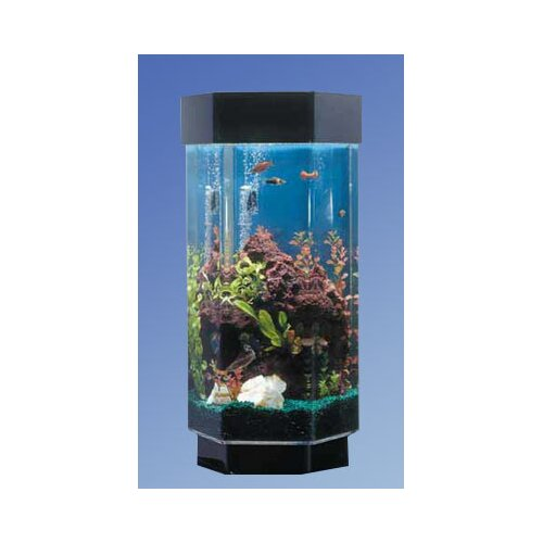 Hexagon fish tank lookup beforebuying for 20 gallon hexagon fish tank