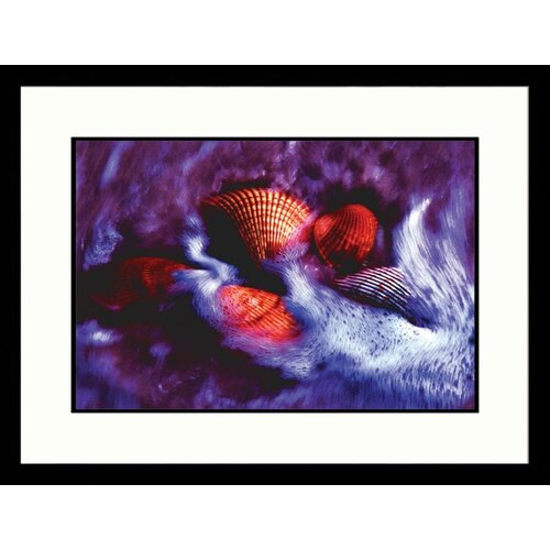 Great American Picture Seascapes 'Beach Shells' by Pat Canova Framed Photographic Print