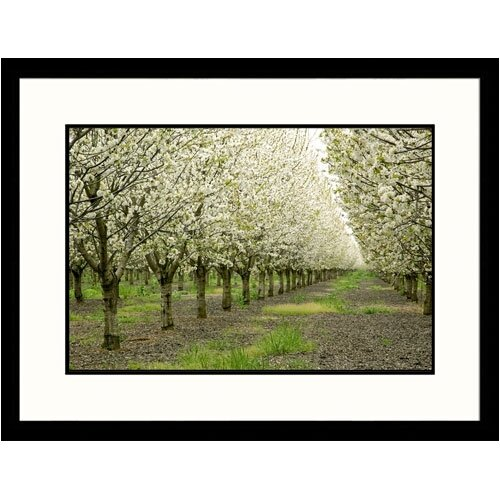 Great American Picture Florals Cherry Orchard Framed Photographic Print