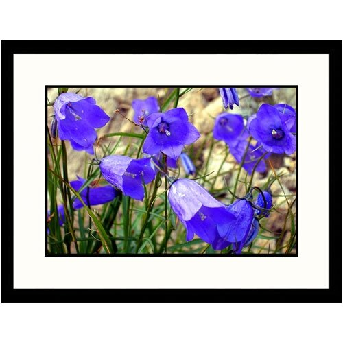 Florals Alpine Flowers Framed Photographic Print