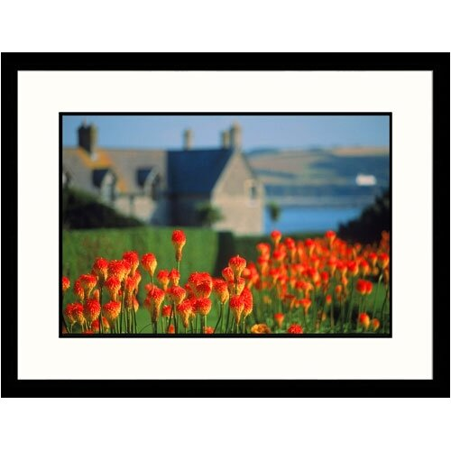 Great American Picture Florals Red Hot Pokers Framed Photographic Print