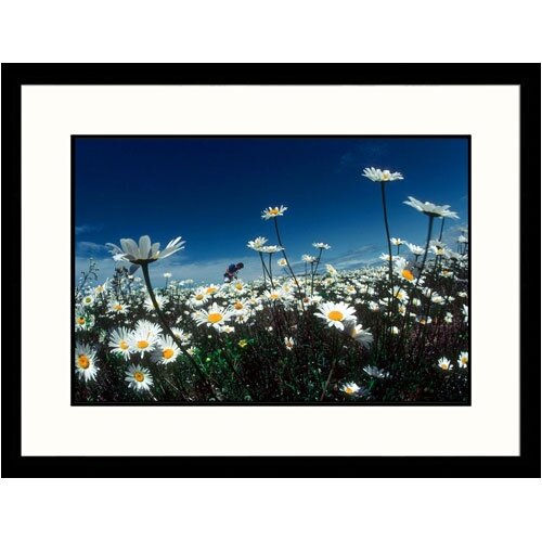Great American Picture Florals Daisies Bouquet Framed Photographic Print