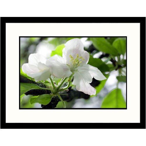 Great American Picture Florals Apple Blossom Framed Photographic Print