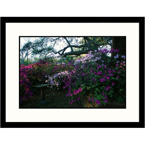 Florals Azelea Bed Framed Photographic Print