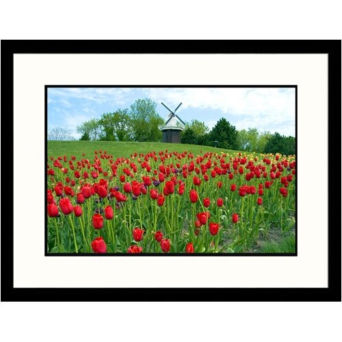 Florals Holland Tulip Festival Framed Photographic Print
