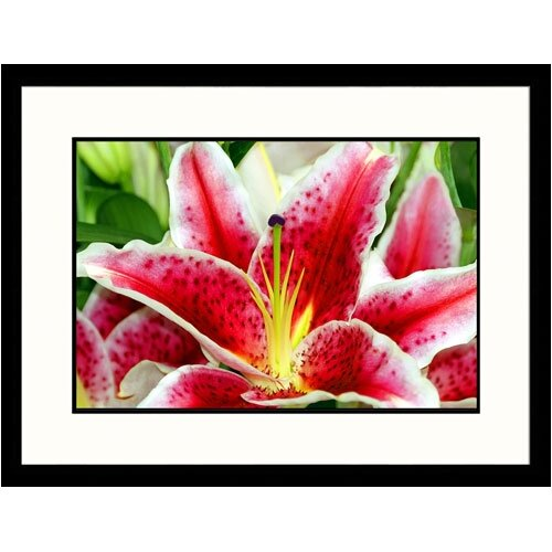 Great American Picture Florals Closeup Lily Framed Photographic Print