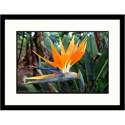 Florals Bird of Paradise Framed Photographic Print