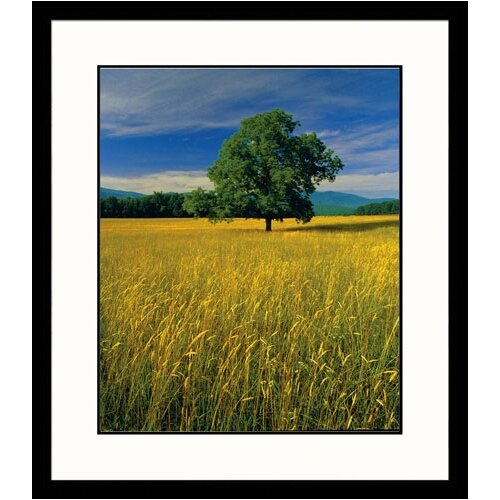 Great American Picture Landscapes 'Single Tree' by Adam Jones Framed Photographic Print