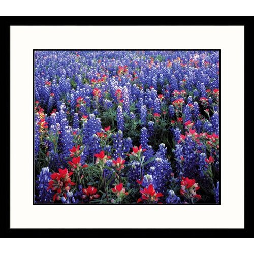Great American Picture Landscapes 'Bluebonnets Country' by Adam Jones Framed Photographic Print