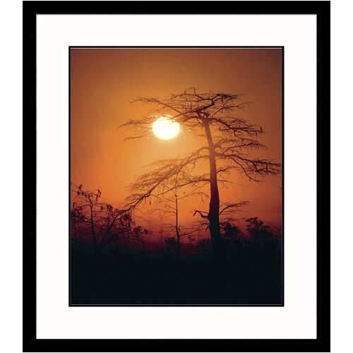 Great American Picture Landscapes 'Everglades' by Adam Jones Framed Photographic Print
