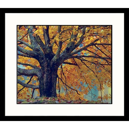 Great American Picture Landscapes 'Stately Maple' by Adam Jones Framed Photographic Print
