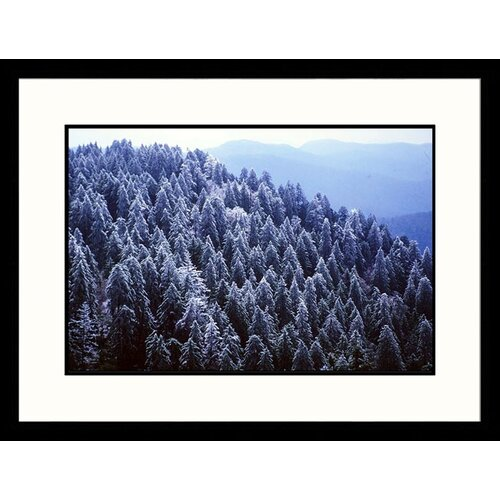 Great American Picture Landscapes 'Iced Spruce Forest, Great Smokey Mountains, Tennessee' by Jack Jr Hoehn Framed Photographic Print
