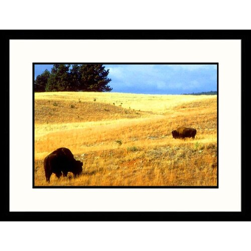 Great American Picture Landscapes 'Wind Cave National Park, South Dakota' by Allen Russell Framed Photographic Print