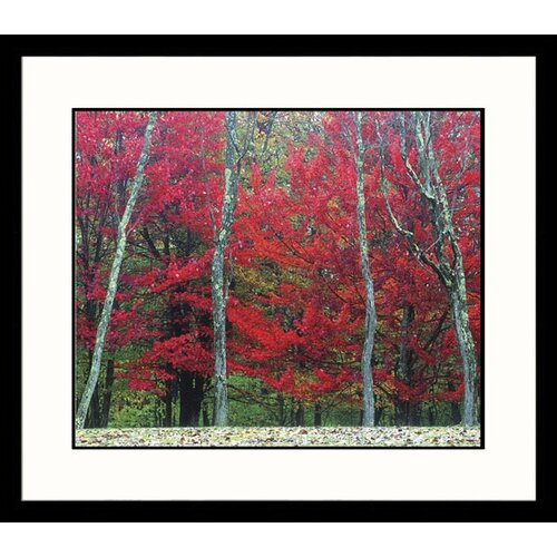 Great American Picture Landscapes Autumn West Virginia Framed Photographic Print