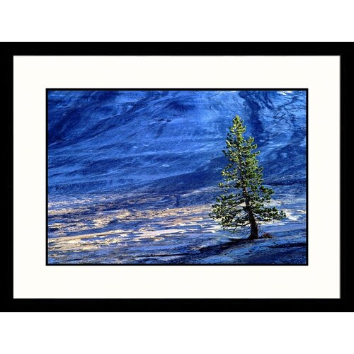 Great American Picture Landscapes 'Isolated Tree Yosemite National Park, California' by David Wasserman Framed Photographic Print