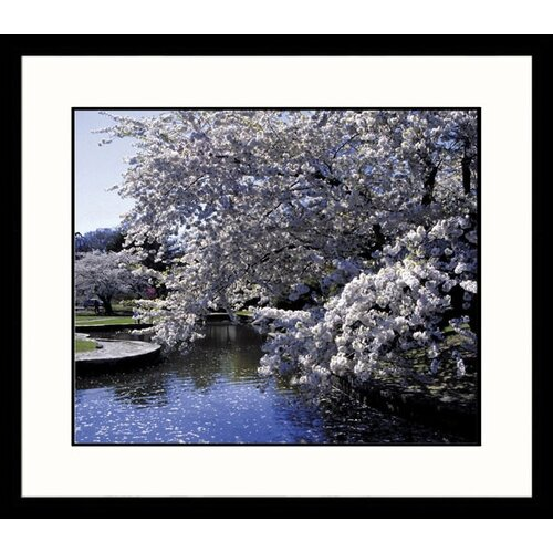 Great American Picture Landscapes Dogwood Tree Framed Photographic Print