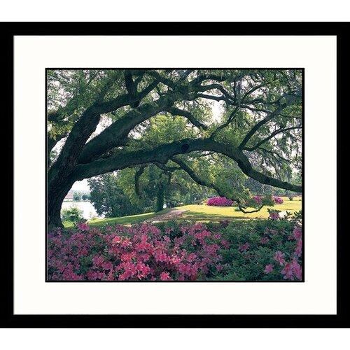 Landscapes Southern Garden Framed Photographic Print