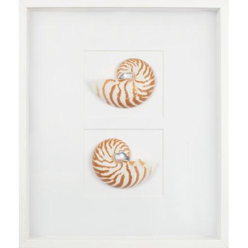 Mirror Image Home Nautilus Shells Graphic Art Shadow Box