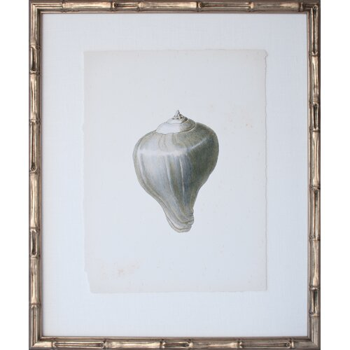 Vintage Shell I Framed Graphic Art
