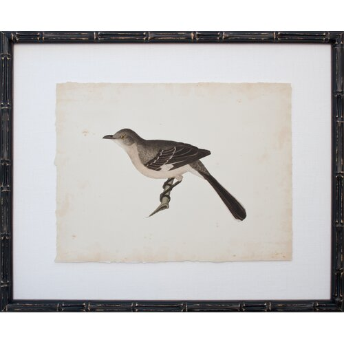 Vintage Bird II Framed Graphic Art