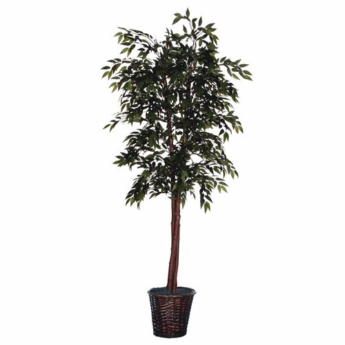 Cedar with Cones Executive Smilax Tree in Basket